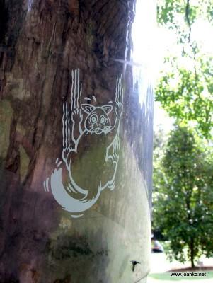 Possum collar around a tree