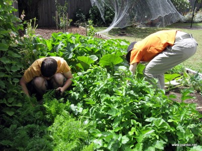 Brad and Damjan foraging in the vegie patch