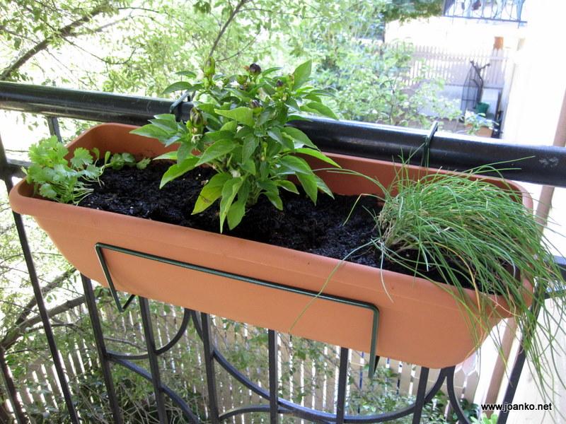 Balcony herb garden Joan Ko