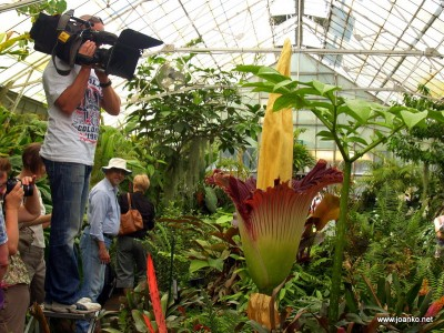 The Sunrise camera crew films the flower